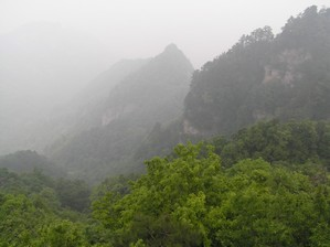 Misty Forest Views - Wudang Mountain